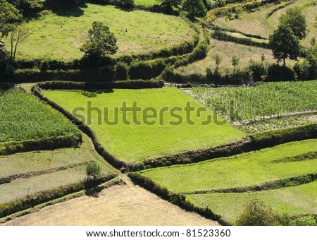 fields landscape with green blocks