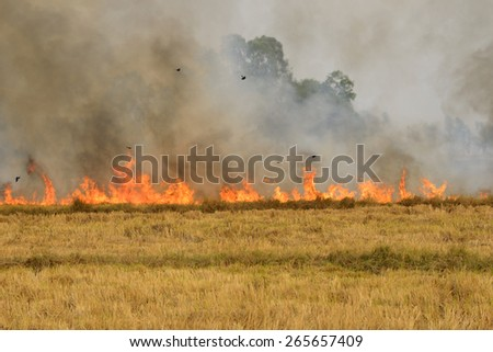 Fields of fire - stock photo