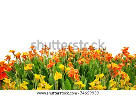 Fields of flowers as a foreground - stock photo