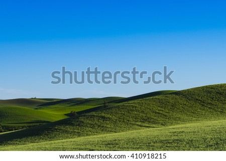 Fields of green wheat in the Palouse region of Washington state - stock photo