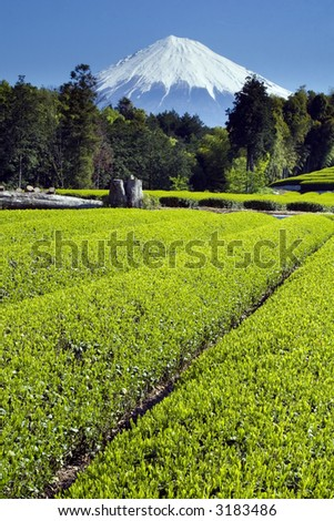 Fields of new green tea in Spring with Mount Fuji - stock photo