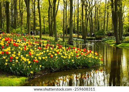 fields of tulips in Keukenhof park in Netherlands - stock photo
