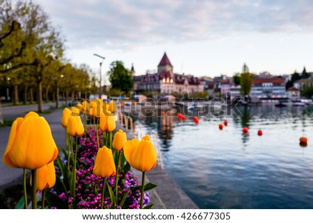 Fields of tulips in Morges, Switzerland - stock photo