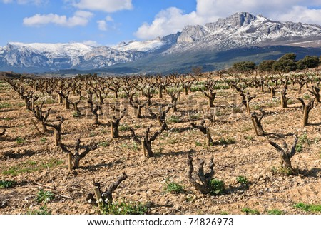 Fields of vineyards in La Rioja, Spain - stock photo