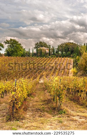 Fields of vineyards in the Italian landscape - stock photo