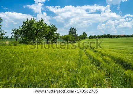 Fields of wheat fully ripe on the background of summer landscape - stock photo