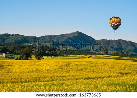Fields of yellow flowers with a balloon - stock photo