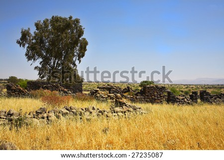 Fields with a yellow dry grass and a tree on a background of the  sky - stock photo