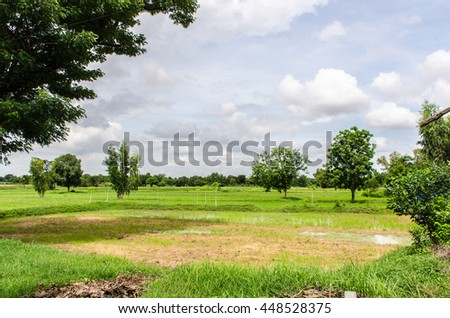 Fields with blue sky  of Space for decoration.