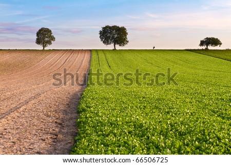 Fields with trees and walker, Pfalz, Germany - stock photo