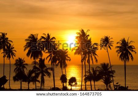Fiery Backdrop Coconut Horizon  - stock photo