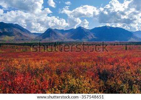Fiery fall color along the Parks Highway, Alaska, USA - stock photo
