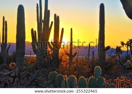Fifth Sunset at Saguaro National Park near Tucson Arizona. - stock photo