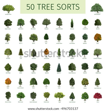 Fifty different tree sorts names illustrations stock for Garden trees types