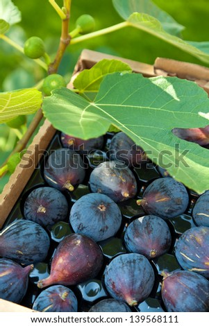 Fig - stock photo