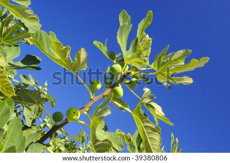 Fig II - stock photo