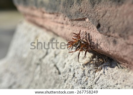 fight for survival - stock photo
