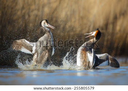 fighting birds - stock photo