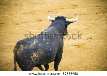 Fighting bull picture from Spain. Corrida de Toros - stock photo