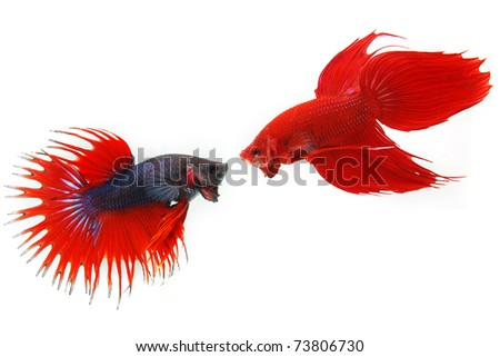 Red fish Stock Photos, Illustrations, and Vector Art