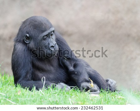 figure of the young gorilla on the lawn