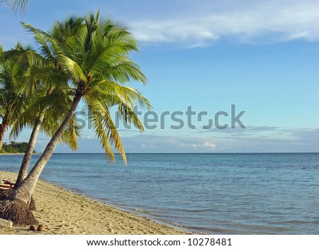 Fiji Beach and Palm Trees - stock photo