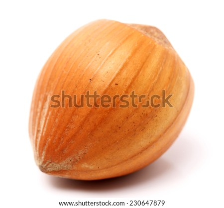 Filbert nut isolated on a white background - stock photo