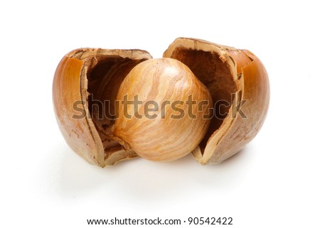 Filbert nut isolated on white background - stock photo