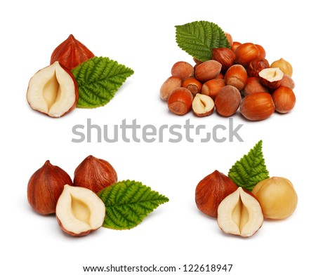 Filbert nut set isolated on white background