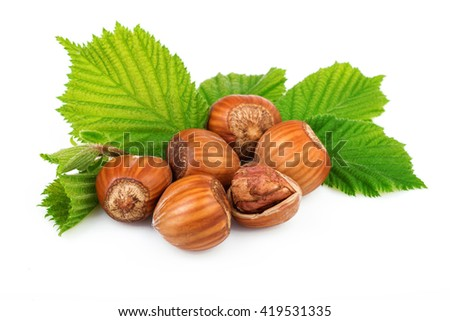 Filbert nuts with leaves on white background  - stock photo