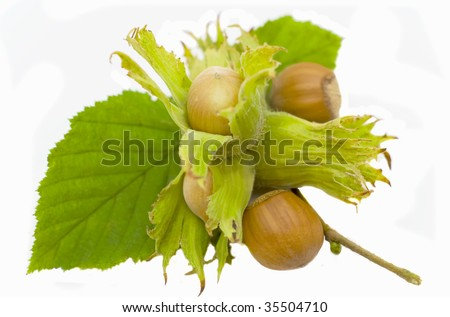 filbert with leaves isolated on a white background - stock photo