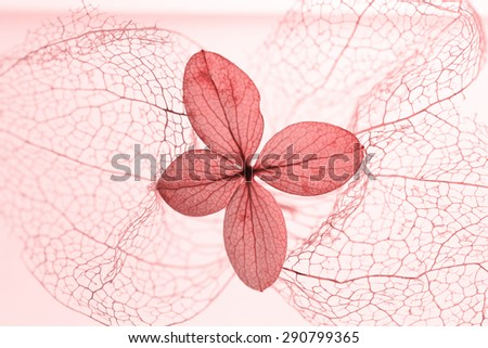 filigree physalis skeleton and dried hydrangea blossom, light pink toned - stock photo