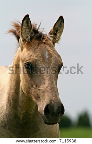 Filly Portrait