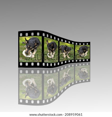 Film strip with dog eating bone - stock photo