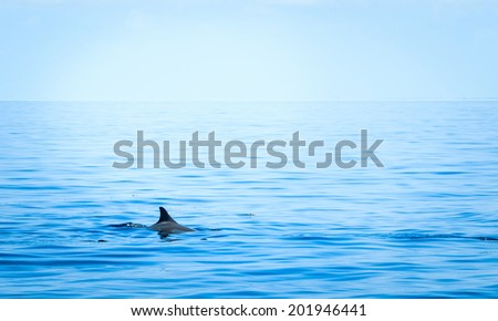 Fin of a shark in the high sea - stock photo