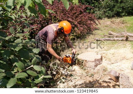 Final slice being cut from tree trunk with chainsaw