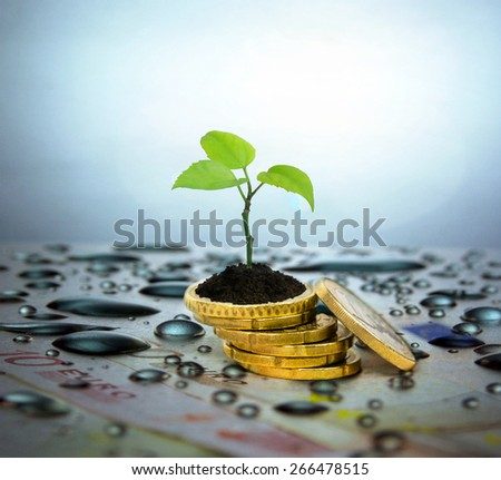 Financial planning and investment concept. Coins, tree branch and water droplets in the background. - stock photo