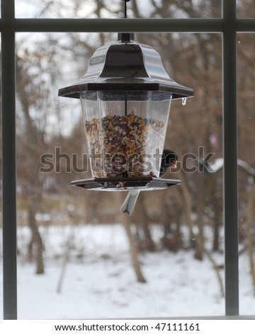 Finch on feeder in window in winter - stock photo