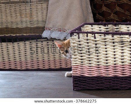 Find the cat. Kitten hiding among the boxes. wicker boxes. Kitten small. Cat peeking out of a basket - stock photo