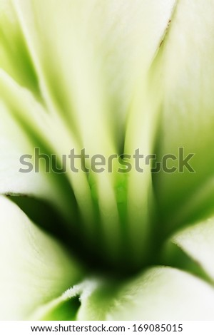 Fine art of close-up flower blurred