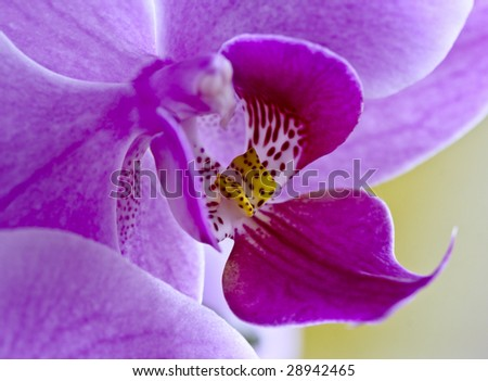 fine close up image of purple orchid flower background - stock photo