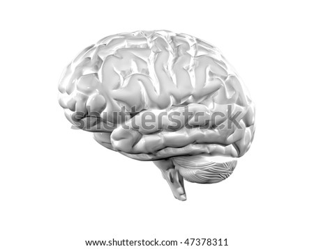 fine 3d illustration of white brain background