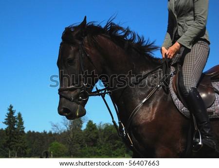 FINE HORSE - stock photo