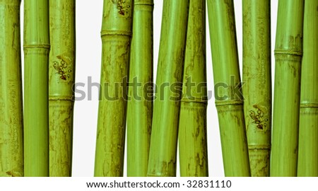 fine image of different bamboo, nature background