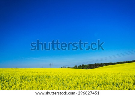 Fine view of  rapefield and blue sky. - stock photo