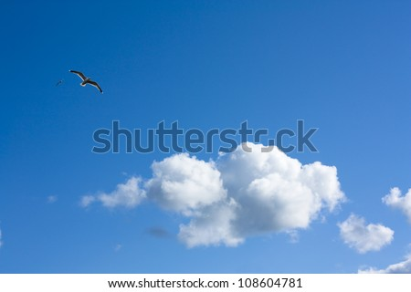 Fine weather, blue sky panorama with white clouds and a bird - stock photo