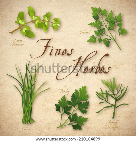 Fines Herbes, classic French herb blend for cooking: Sweet Marjoram, Chervil, Chives, Italian Flat Leaf Parsley, French Tarragon on rustic texture background.  - stock photo