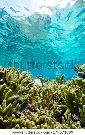 Finger Coral-Porites�£??cylindrica, Okinawa Prefecture/Japan, 2013/6/17.  - stock photo