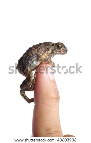 Finger on the toad