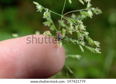 finger tick - stock photo